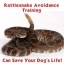 Rattlesnake Avoidance Training - March 26th & 27th