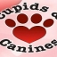 Cupids & Canines ( and Cats)