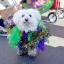 5th Annual Doggie Gras Celebration