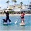 Helen Woodward's Annual Surf Dog Event 2014