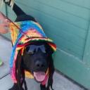 Dog Marley 2014