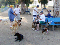 long_beach_dog_park_1